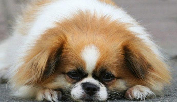 收养流浪猫狗感染