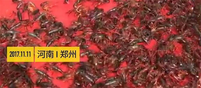 400斤龙虾走红毯现场图片