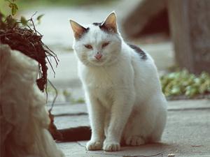 """阿婆吸猫得怪病 """"猫抓病""""惊现多种症状病发相当震惊"""