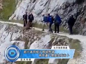 游客将野猪逼下崖 野猪重摔落地旁人淡定拍