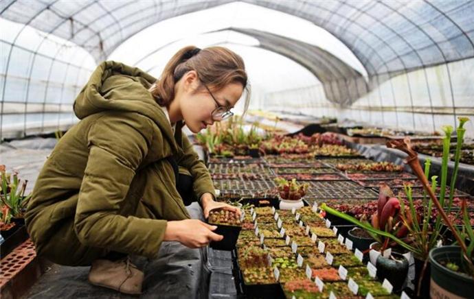 女孩种的植物都吃肉