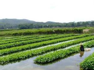 农民巧手打造水上花园 摘菜也需要撑竹排