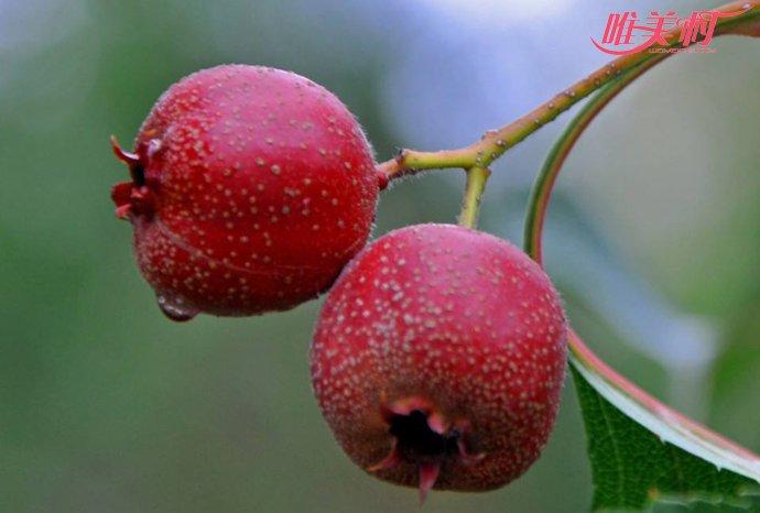 冬天吃水果山楂