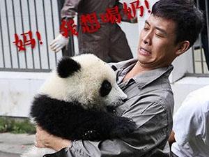 张译被熊猫咬 表情扭曲成一大亮点结果更搞