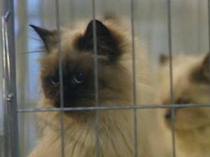 买房当猫宅被投诉 24小时空调供应富豪级别