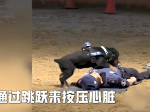 小警犬为他做心脏复苏 重复跳跃救人画面曝光众人被打动