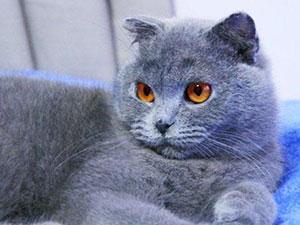 猫咪中毒靠输入狗血保命 背后原因曝光令人