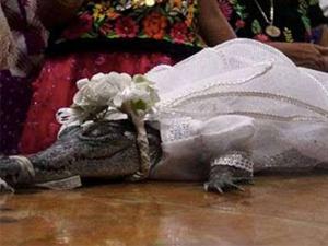 每年娶一条鳄鱼为妻 曝现场画面传统背后由