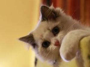 我在猫咪上见过你是什么梗 曝此梗来源原来还有这层解释