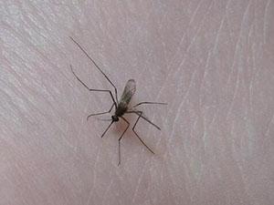 小城禁止蚊子入城怎么回事 曝具体情况让人瞠目结舌