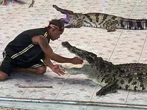 驯兽师被鳄鱼咬中 背后原因及经过曝光游客拍下惊人一幕