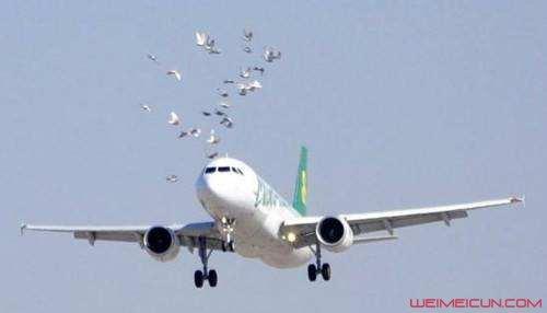 客机撞鸟引擎故障