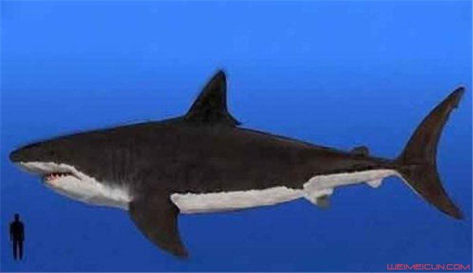 巨齿鲨的天敌是谁 虎鲸的祖先赢了巨齿鲨是真的吗(原创)