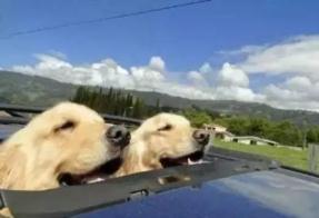拼车拼到两条大狗 滴滴司机这行为受到质疑