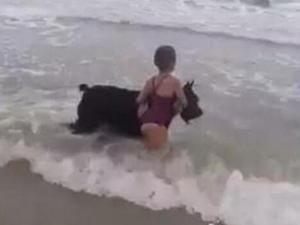 女孩被狗海里救出 具体详情曝光狗狗一举一动令人动容