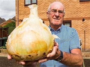 老人种出超级洋葱 超级洋葱竟然长这个样子