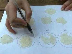 数1亿粒米带学校 奇葩作业的背后竟然是老师