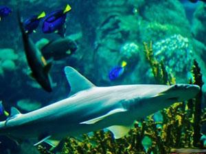 鲨鱼也吃草是怎么回事 鲨鱼吃草居然会变胖