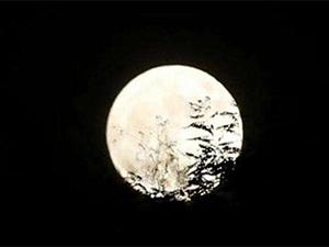 作业画30天月亮怎么回事 奇葩作业频现的背