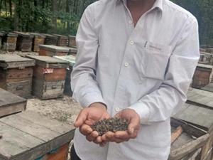 600万只蜜蜂死亡 是因为飞防还是疾病具体详情曝光