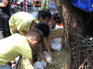 动物园没人提醒兔子咬人 广西4岁男童被咬伤详情经过曝光