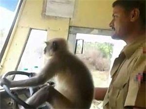 司机让猴子开公交 司机神操作吓懵乘客令人