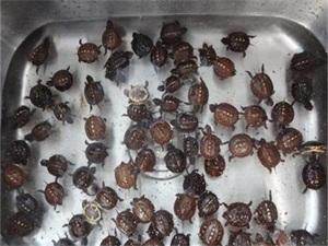 零食盒藏75只乌龟 欲冒充零食混淆过关这些