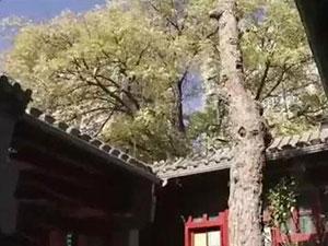 李晨北京四合院曝光 疑要变卖房产四合院内
