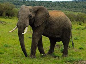 造谣大象丢失被拘 详情回顾造谣者的这些言论令人厌恶