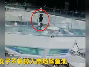 女子掉入鲨鱼池怎么回事 女子为什么掉入鲨