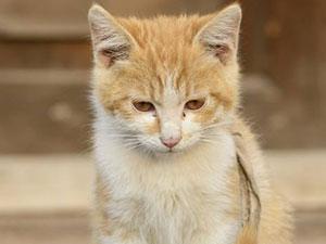 走秀台上出现一只猫怎么回事 猫为什么会出现在走秀台上?