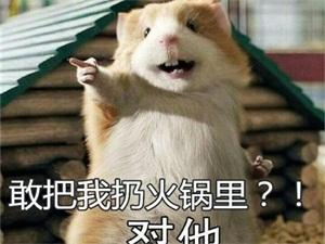 死老鼠放进火锅 自导自演欲敲诈500万不料把自己诓进去
