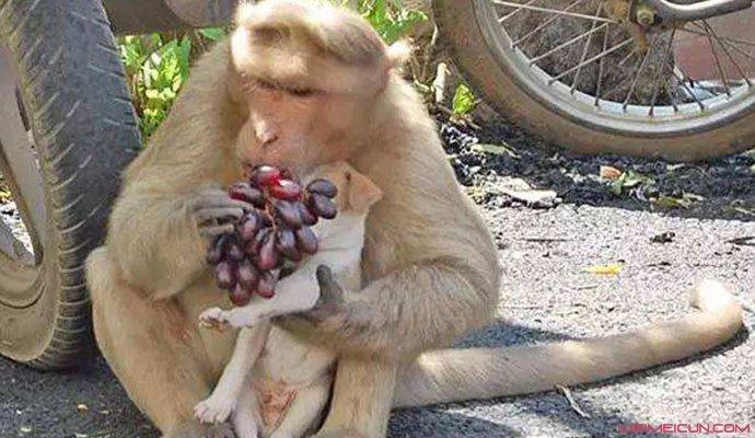 猴子横行印度街头