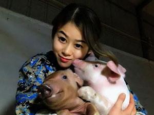 与猪同寝年入百万啥情况 27岁白富美与猪同寝日常大公开