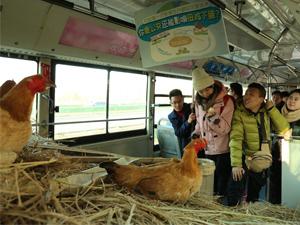 天津街头养鸡公交怎么回事 公交上现鸡窝背