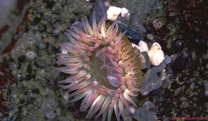 澳海滩现奇异生物