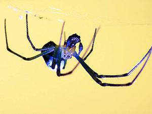男子打蜘蛛被误认家暴 事情经过及结果被揭现爆笑一幕