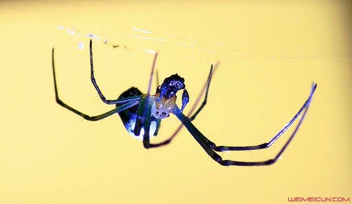 打蜘蛛被误认家暴
