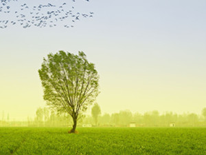 民众可选死后变树是怎么回事 网友的评论可以让人笑一年
