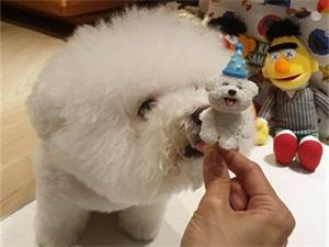 蔡依林为爱犬庆生怎么回事 迷你蛋糕超吸睛