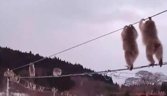 猴子排队走电线