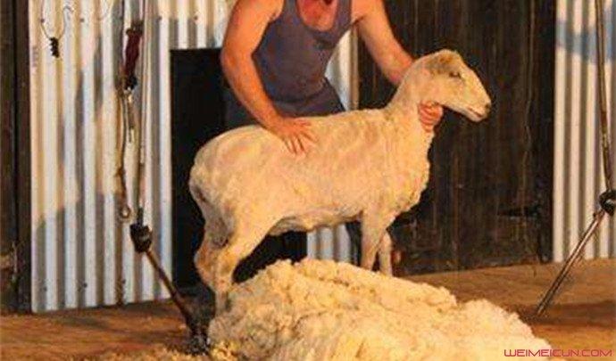 薅羊毛买牛奶