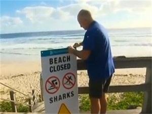 澳男子遇鲨鱼袭击怎么回事 男子遇鲨鱼袭击