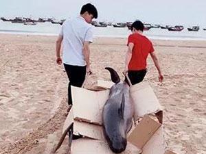 花1500买海豚放生咋回事 万万没想到事情经过竟是这样