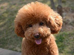 泰迪起身老太受伤 还原事发经过养宠物时这