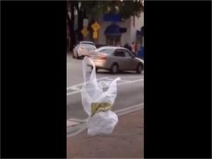"""塑料袋成精了吗 竟独自过马路""""走路""""相当"""