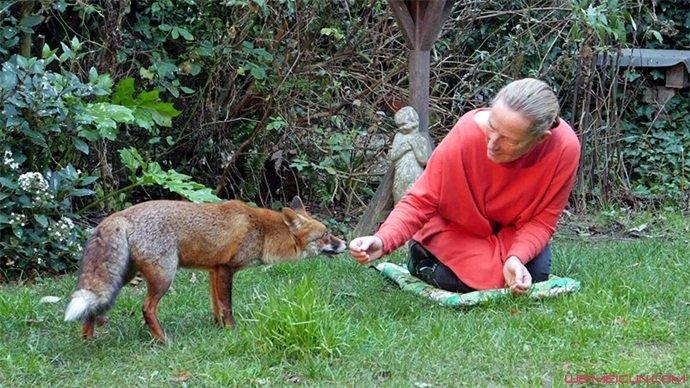 将野狐当女儿养