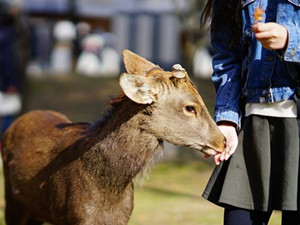 喂食宠物鹿遭袭击怎么回事 整体事件极为罕