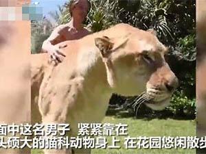 牵800斤狮虎兽散步详情介绍 他成功成为人群中的焦点