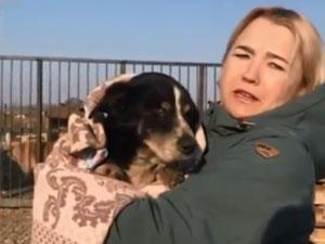 18岁狗狗死而复生 狗狗奇迹生还引人惊事情经过曝光